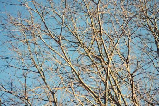 Des arbres en hiver, du ciel bleu (4 janvier 2012)