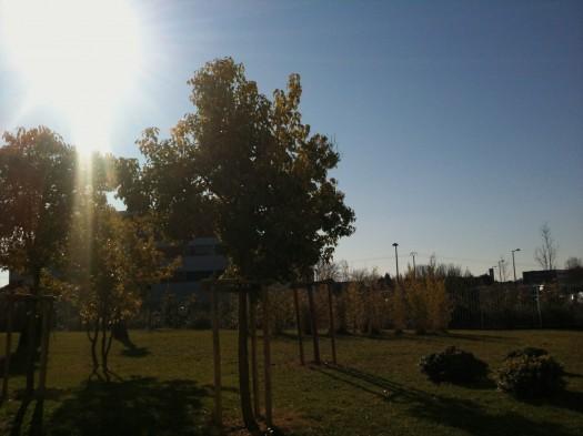 Un jeune arbre qui deviendra grand, Castelnau-le-Lez (13 janvier 2012)