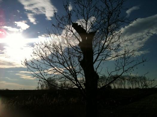 Tree n°2, Lattes (25 février 2012)