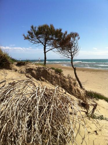 Plage de la Tamarissière, Agde (21 avril 2012)