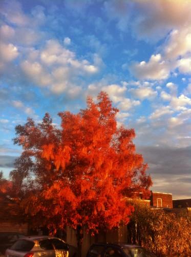 Un arbre tout en couleurs, Montpellier (4 avril 2012)