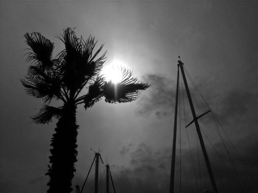 Palmier sur le port, Palavas-les-Flots (28 mai 2012)