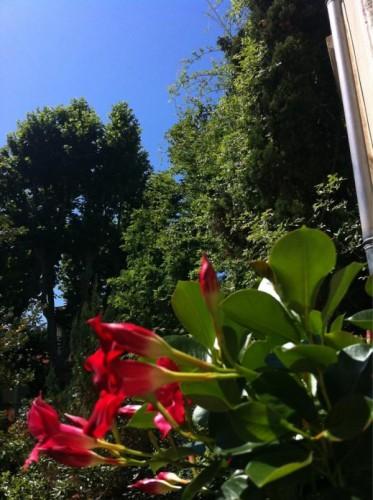 Un petit coin fleuri (15 juin 2012)