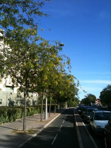 Alignés, Montpellier (21 juillet 2012)