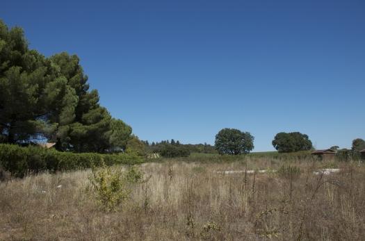 Un champ bien sec, Montpellier (17 août 2012)