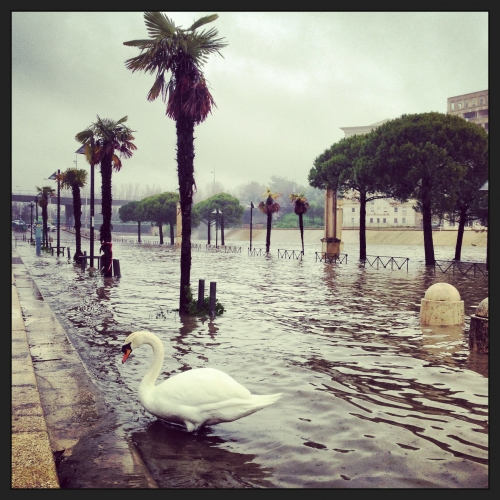 Le cygne reste impassible, Montpellier (28 mars 2013)