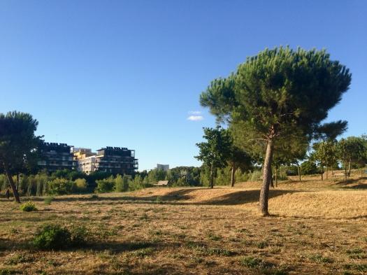 Parc Charpak, Montpellier (29 juillet 2013)