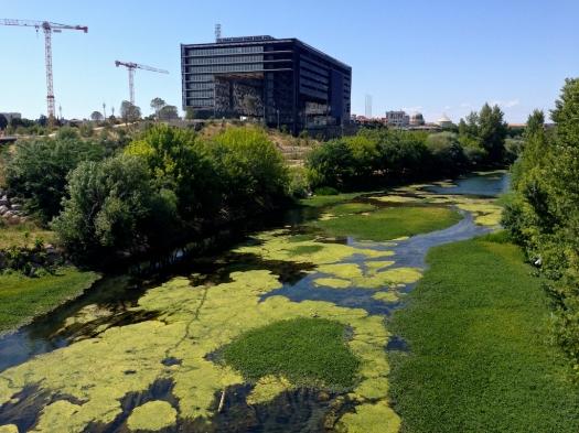 Le Lez et sa verdure, Montpellier (18 mai 2014)