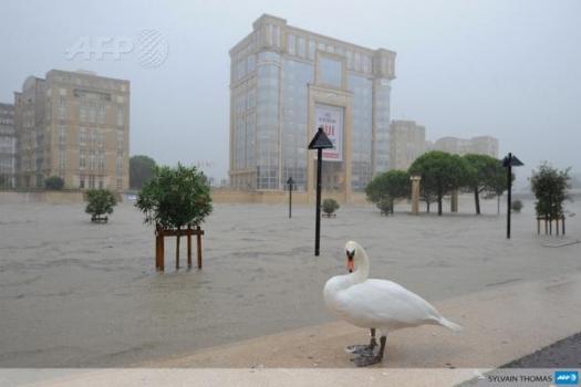 Le cygne du Lez, par Sylvain Thomas - AFP (29 septembre 2014)